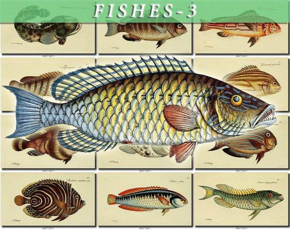 FISHES-3 90 vintage print