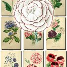 FLOWERS-20-b2 210 vintage print