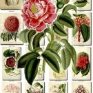 FLOWERS-94 253 vintage print