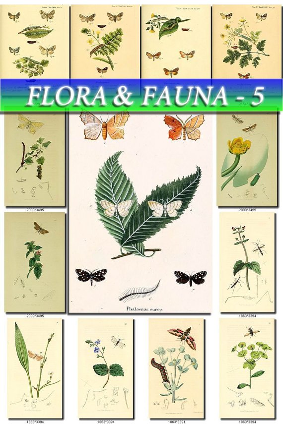 FLORA ,  FAUNA-5 255 vintage print