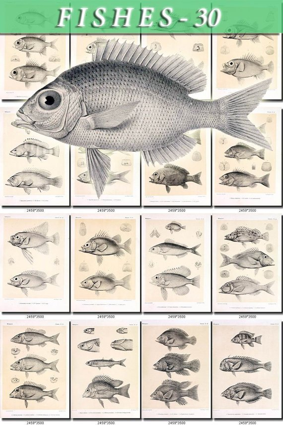 FISHES-30-bw 102 vintage print