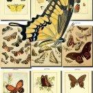 BUTTERFLIES-17-b4 207 vintage print