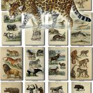 MAMMALS-2 203 vintage print