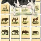 MAMMALS-11 216 vintage print