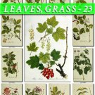 LEAVES GRASS-23 214 vintage print