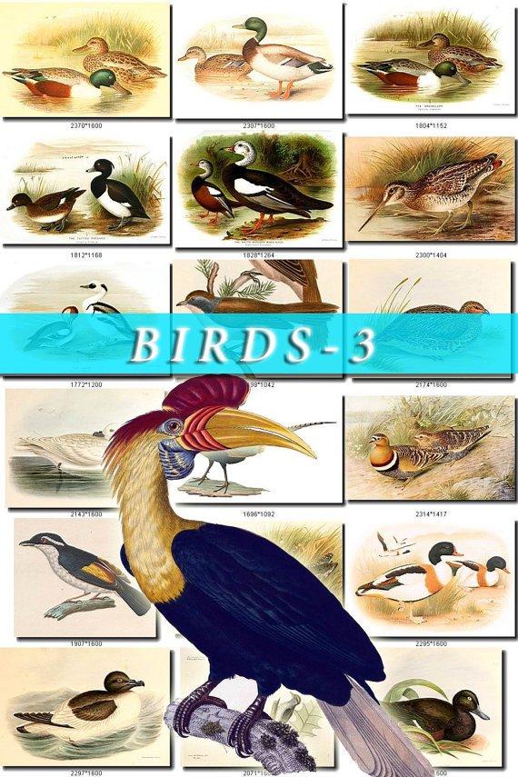 BIRDS-3 780 vintage print