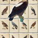 BIRDS-94 130 vintage print