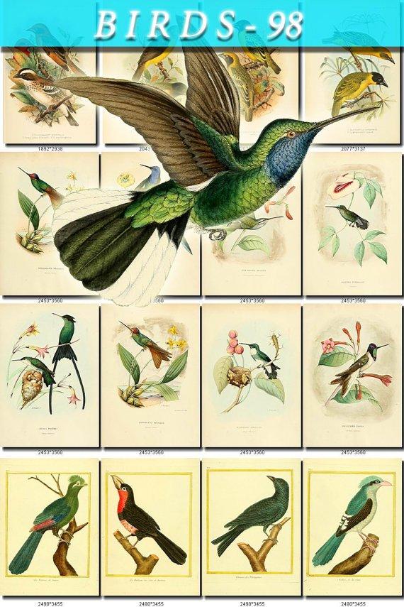 BIRDS-98 125 vintage print