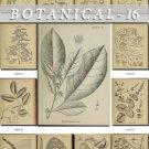 BOTANICAL-16-bw 217 black-, -white vintage print