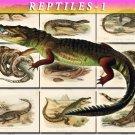 REPTILES & AMPHIBIAS-1 169 vintage print