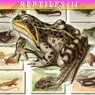 REPTILES & AMPHIBIAS-14 133 vintage print