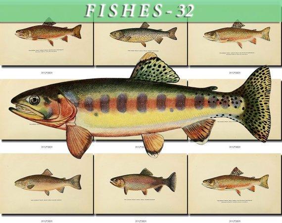 FISHES-32 51 vintage print