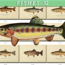 FISHES-32 51 vintage print