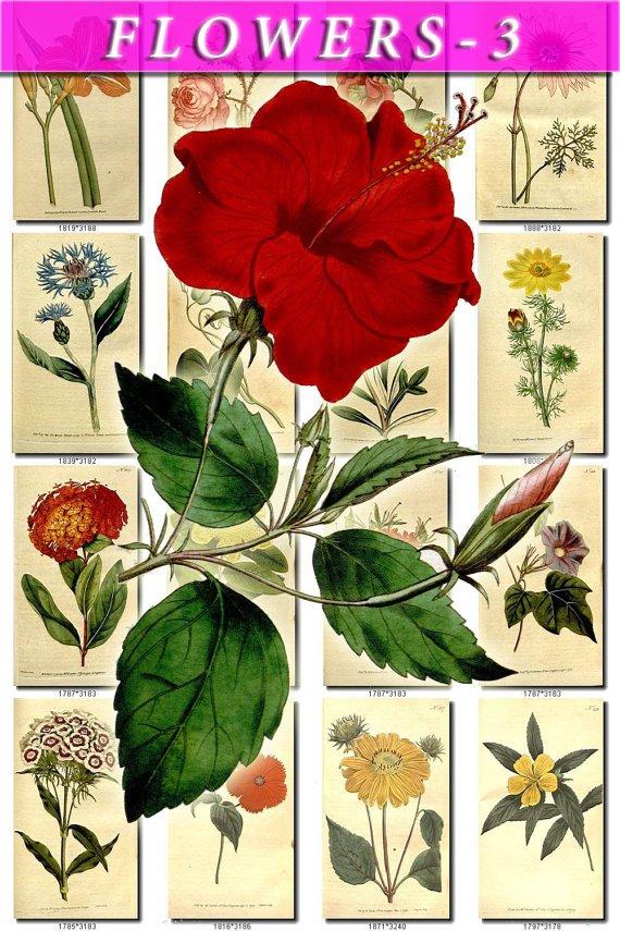 FLOWERS-3 287 vintage print