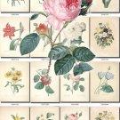 FLOWERS-106 297 vintage print