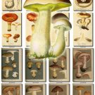 MUSHROOMS-14 173 vintage print
