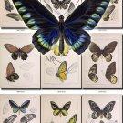 BUTTERFLIES-35 76 vintage print