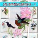 HUMMINGBIRDS-1 TROCHILIDAE 208 vintage print