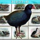 BIRDS-65 74 vintage print