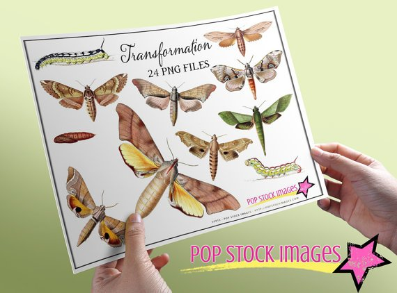 Moth Caterpillar Digital Image Collection