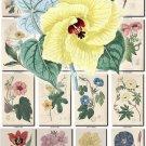 FLOWERS-15 263 vintage print
