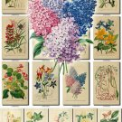 FLOWERS-24 71 vintage print