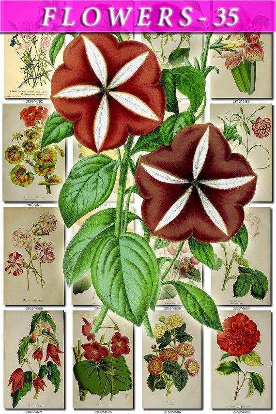 FLOWERS-35 72 vintage print