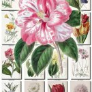 FLOWERS-63 256 vintage print