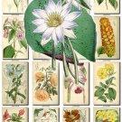 FLOWERS-73 204 vintage print
