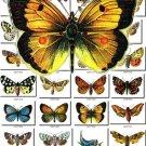 BUTTERFLIES-2 1200 vintage print