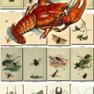 INSECTS-20 172 vintage print