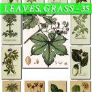 LEAVES GRASS-35 193 vintage print