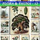 FLORA ,  FAUNA-12 249 vintage print