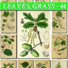 LEAVES GRASS-44 212 vintage print