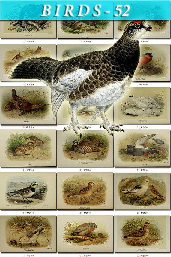 BIRDS-52 58 vintage print