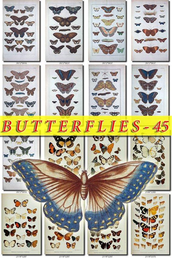 BUTTERFLIES-45 220 vintage print