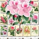 PINK-1 FLOWERS 260 vintage print