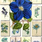 BLUE-1 FLOWERS 248 vintage print