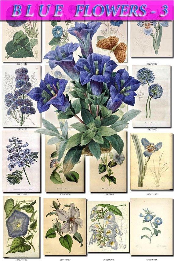 BLUE-3 FLOWERS 220 vintage print