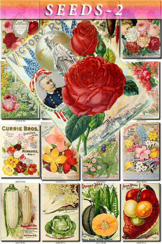 SEEDS-2 Catalogs Covers Collection with 74 vintage print