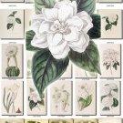 WHITE-4 FLOWERS 210 vintage print