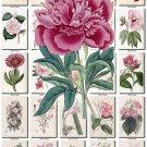 PINK-3 FLOWERS 220 vintage print