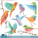 H, Painted Watercolor Colorful Birds Clipart - card design, watercolor, h, drawn