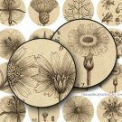 Botanical 1 inch Circles, Collage Sheet, Vintage Floral, Digital Botanical