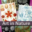 Digital collection Art in Nature by Ernst Haeckel - zoology biology cards