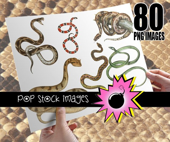 Snakes Digital Image Collection