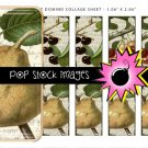 Vintage Fruits Digital Domino Collage Sheet-print Tiles for Pendants