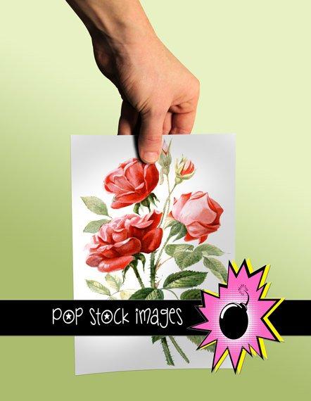 Vintage BOTANICAL ROSES Digital Graphic Printable - Large Digital Image of