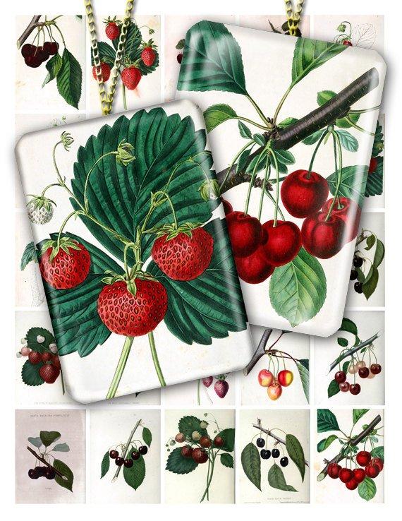 Collage BERRIES-01 vintage print