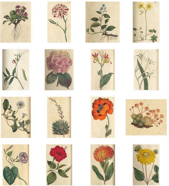CD CURTIS BOTANICAL Book Vintage Floral Art Print Images Picture Antique Flowers